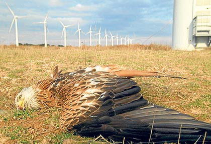 bald-eagle-dead